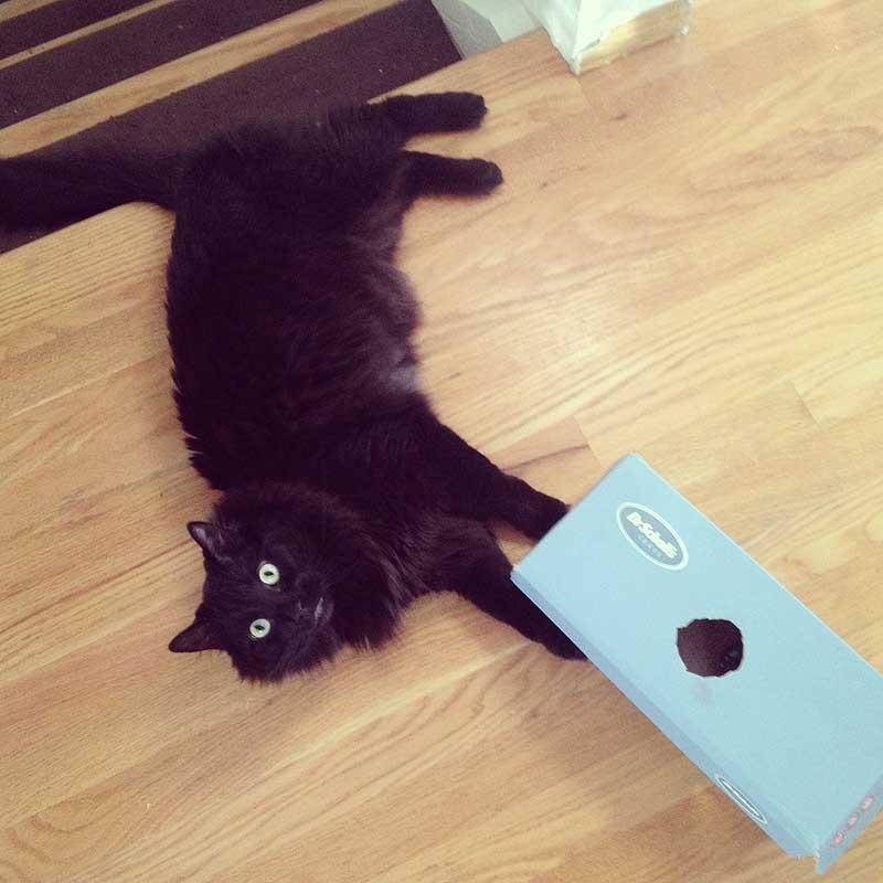 the ninja cat